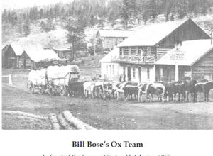 Bill Bose's ox team.jpg